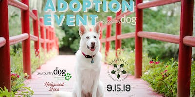 Lowcountry Dog Adoption Event at Magnolia Plantation