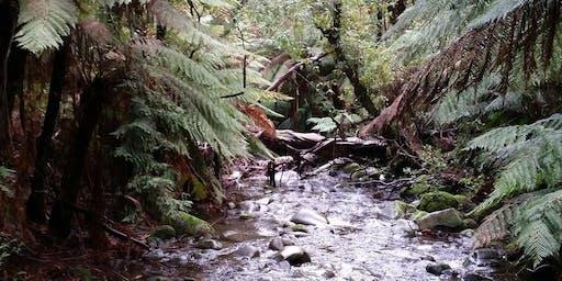 Junior Rangers Dreaming (NAIDOC Week) - Yarra Ranges National Park