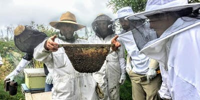Beekeeping 2-Day Course