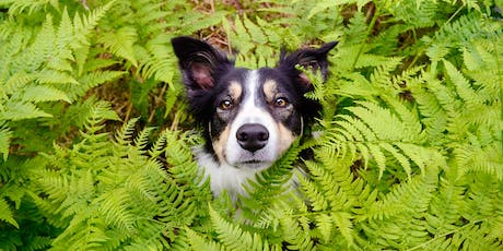 Domestic dog interactions with wildlife tickets