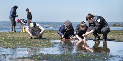 Junior Rangers Rockpool Ramble (Sea Slug Search) - Port Phillip Heads MNP