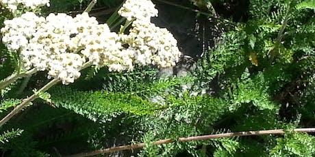 Wild Herb Walk, Bountiful, Utah  tickets