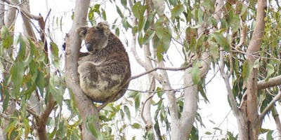 SoS Iconic Koala Project - update to Expert Panel and stakeholder networking