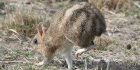 Junior Rangers Bouncing Bandicoots - Point Nepean National Park tickets