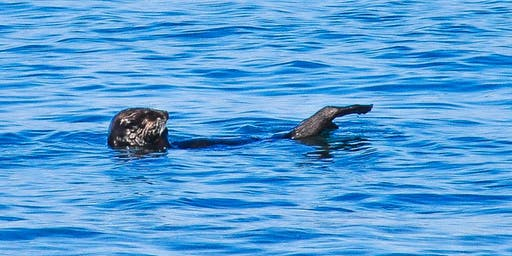 Sea Otters, Self-Defense & Synergy - 1 Day Retreat in Moss Landing, CA