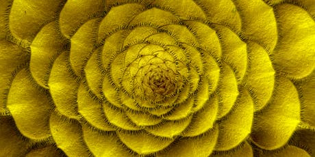 Sacred Geometry & Fibonacci Workshop Coffs Harbour tickets