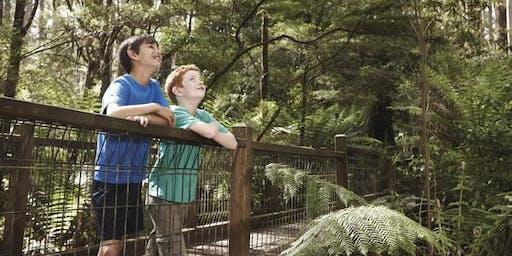 Junior Rangers Rainforest Explorer - Yarra Ranges National Park