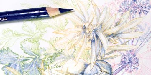 Gin & Draw: Botanicals