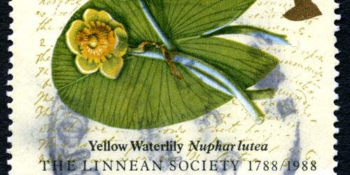Linnean Society: Irene Manton Lecture 2019