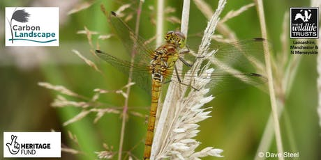Dragonfly Festival tickets