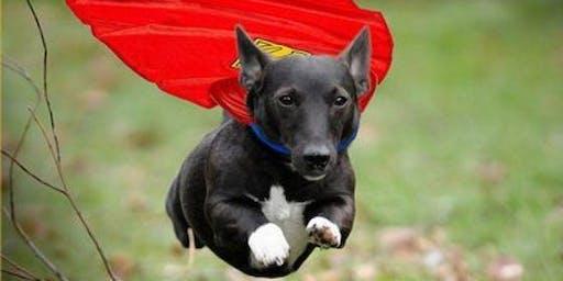 Animal Super Powers