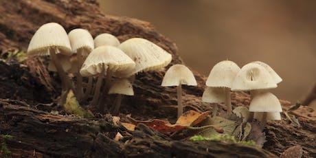 Identification of Fungi III tickets