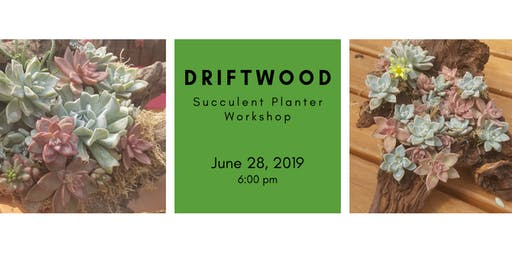 DIY: Creating with Driftwood - Succulent Planters!