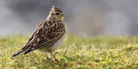 Jersey Wildlife Photography tour - West   tickets