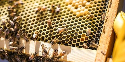 Round Rock Honey Community Honey Harvest