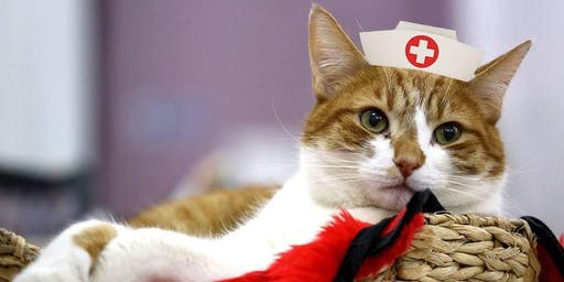 Pet First Aid Training with Lady Dinah's Cats