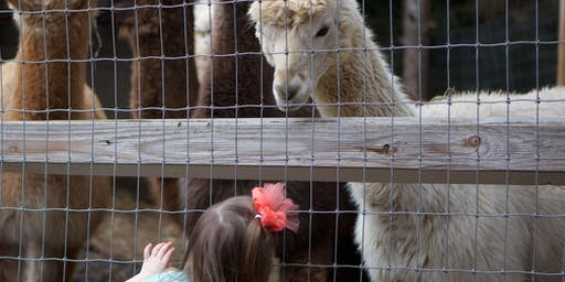 National Alpaca Days at Lilymoore Farm