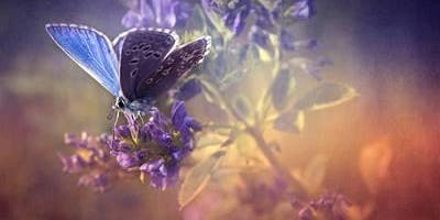 Blue Butterfly Healer  Yoga Full Moon Meditation