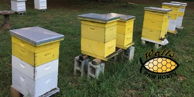 Beekeeping Basics: What you need to know to get started keeping bees.