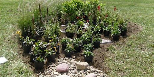 DRIP Lunch and Learn Session #3  - Building Rain Gardens