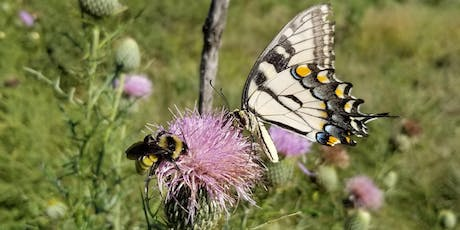 Knox County Nature Days: Pollinator Day: Butterflies & How to Attract Them tickets