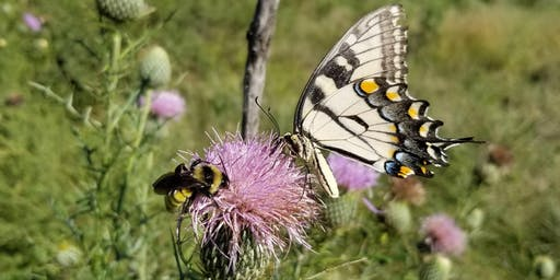 Knox County Nature Days: Pollinator Day: Butterflies & How to Attract Them