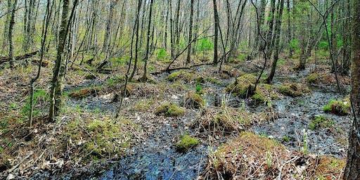 Wetlands of the Chippewa Moraine