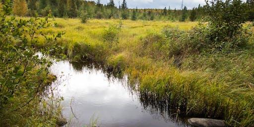 Wetlands of the Penokee Hills