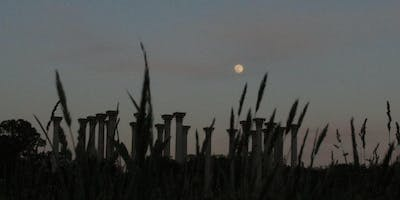 Friday, August 16 - Full Moon Forest Bathing