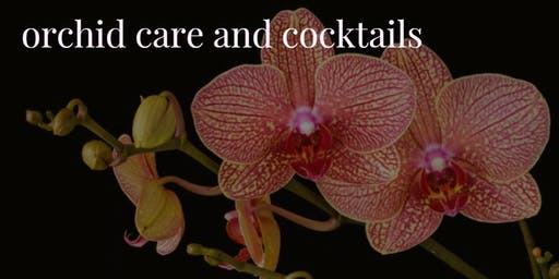 Orchid Care and Cocktails