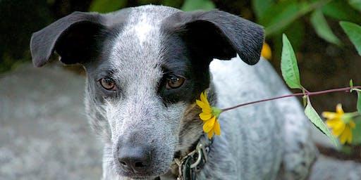 PhotoWalks Dog Photography Class