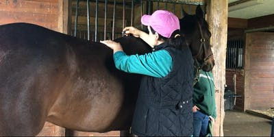 3 Powerful Ways to Alleviate Neck and Back Pain In a Matter of Minutes  for Horses and Their Riders