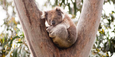 Lunchtime Wildlife Talk - Wildlife Rescue and Care - Maryborough Library tickets
