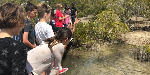 Marine biologist field day (mangroves, shore birds and mini beasts)