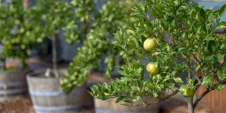 Growing and caring for your citrus trees - July 2019 tickets