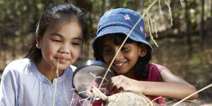 Junior Rangers What's in the web? - Solomon Gully...