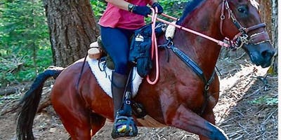 Keep Your Horse Strong, Balanced and Supple over Long Distances and Rough Terrain