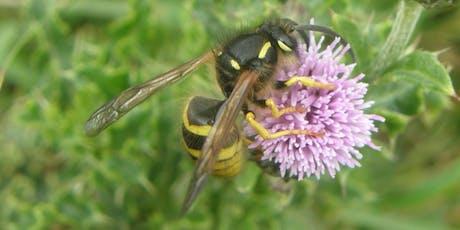 Vespidae (social, potter and mason wasps) tickets