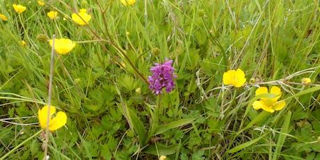 Birnie and Gaddon Lochs  - Wildflower Identification Walk tickets