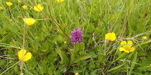 Birnie and Gaddon Lochs  - Wildflower Identification Walk