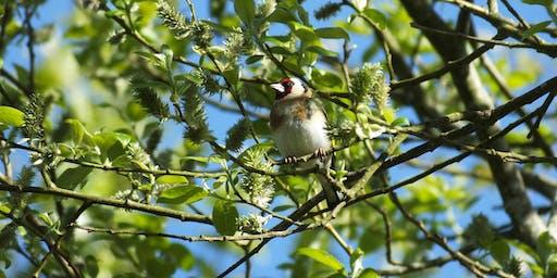 Birnie and Gaddon Lochs  - Bird Identification Walk