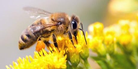 Love Nature and Respect Living Things Workshop with LEGO WEDO Bee & Flower tickets