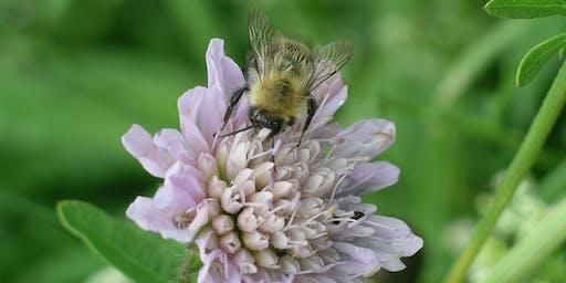 Pollinator Survey Techniques