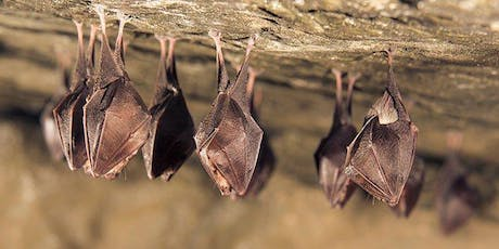 Family Open Day - Celebrating International Bat Weekend tickets