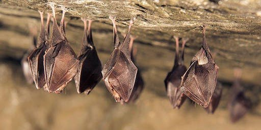 Family Open Day - Celebrating International Bat Weekend