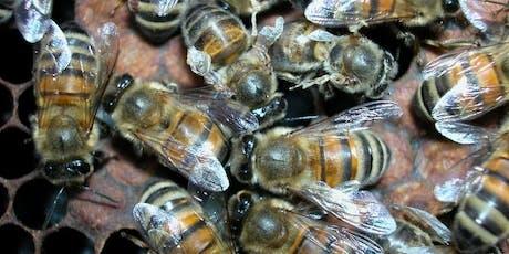 Bucks County Beekeepers - Bee Disease Day tickets