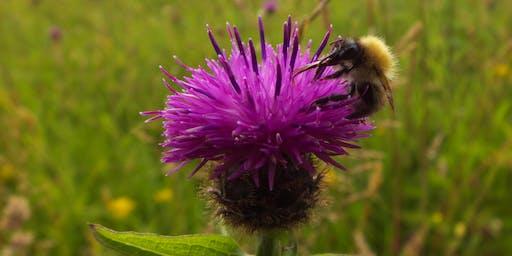 Birnie and Gaddon Lochs  - Pollinator Identification Walk
