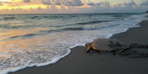 Summer Pop Up Event-Turtle Walk, Sea Turtle Nesting Experience