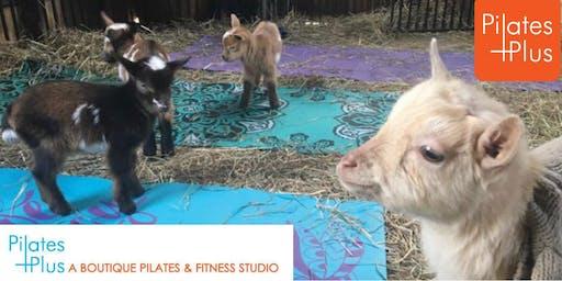 Pilates Plus WV 10 Year Anniversary Sip and Baby Goat Yoga