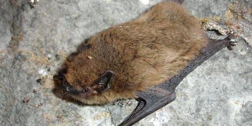 Birnie and Gaddon Lochs  - Bat Walk
